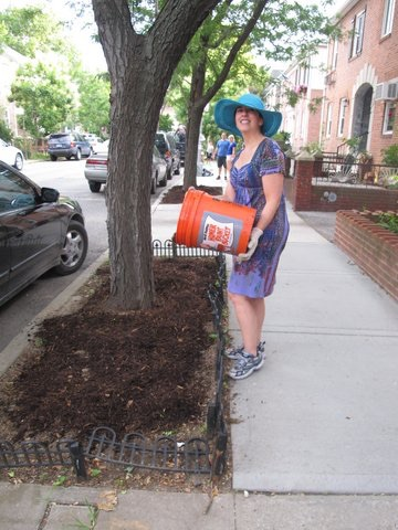 Nancy Perez of 27 th street Block Association mulch Watering event  summer 2015